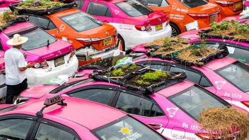 Taxi-Dachgärten als Protest gegen Corona-Krise