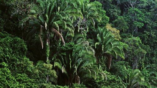 Parks gab es schon bei den alten Maya