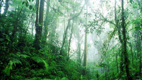 Wald braucht für Erholung wohl länger als gedacht