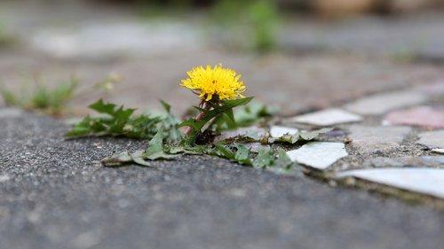 """Botaniker beschriftet Unkraut in der Stadt: """"Das ist Umweltbildungsarbeit"""""""