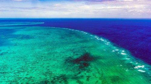Riesige alte Koralle im Great Barrier Reef entdeckt