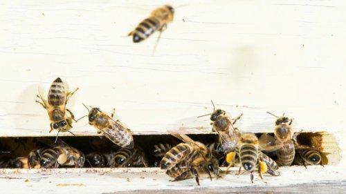 Crowdsourcing-Projekte wollen Bienen retten