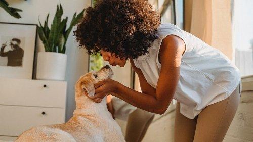 Wie uns Hunde wirklich zeigen, dass sie uns mögen