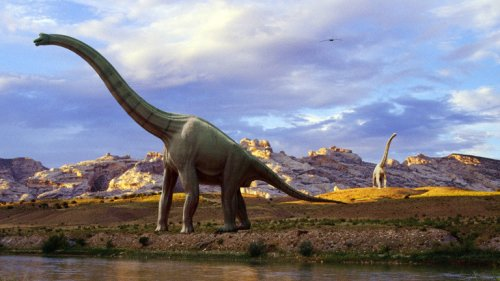 Schon manche frühen Dinos waren sozial
