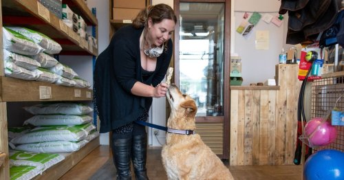 Devon doggy deli's food looks fit for humans