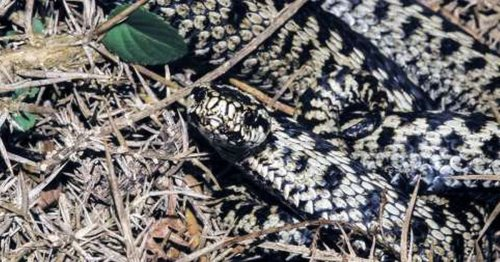 Coastguard called after person bitten by snake