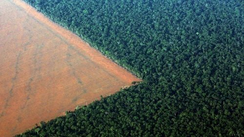 Pará responde por quase metade de todo o desmatamento na Amazônia em 2020