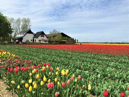 9 Blogger verraten ihre besten Niederlande-Tipps - Die bunte Christine