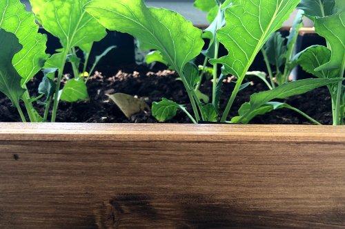 Balkongarten: Hochbeet selber bauen · Die Gradwanderung