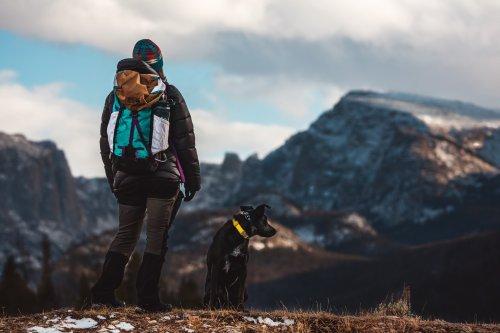 Ohne Leine wandern mit Hund – 6 Tipps