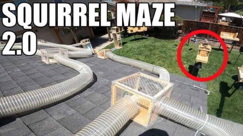 Former NASA Engineer Builds An Even More Epic 'Mission Impossible' Obstacle Course To Hilariously Thwart Squirrels In His Backyard - Digg