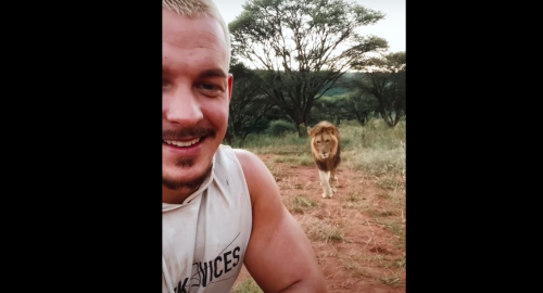 Guy Turns His Back On A Sneaky Lion, And This Is What Happened Next - Digg