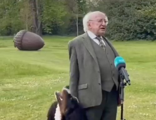 The President Of Ireland's Bernese Mountain Dog Steals The Show During A Press Conference - Digg