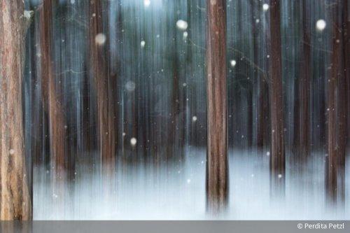 Doppelbelichtung: So entstehen kreative Fotos in der Winterzeit | DigitalPHOTO