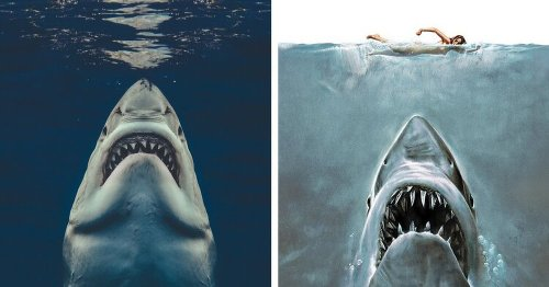 Real-Life Jaws? Photographic Captures Iconic Shark Image