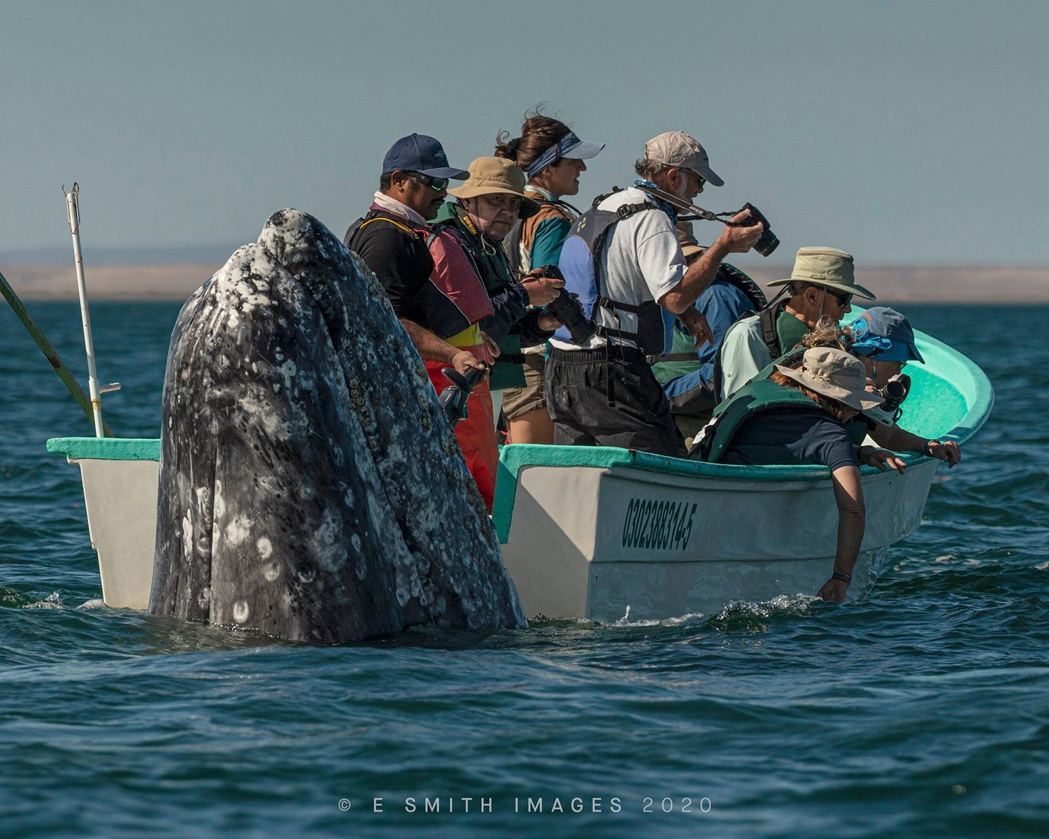 How I Made It: The Story Behind Eric Smith's Surprising Whale Photo