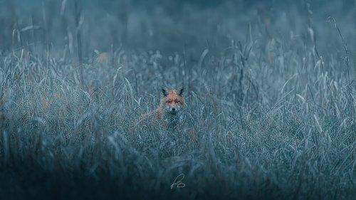 Giuliano Scarparo's Dream-Like Images of Wildlife