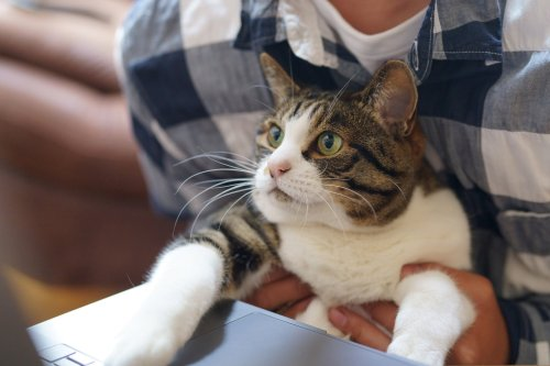 These Amazon Prime Movies Are Purr-Fect For Your Cat | PawTracks