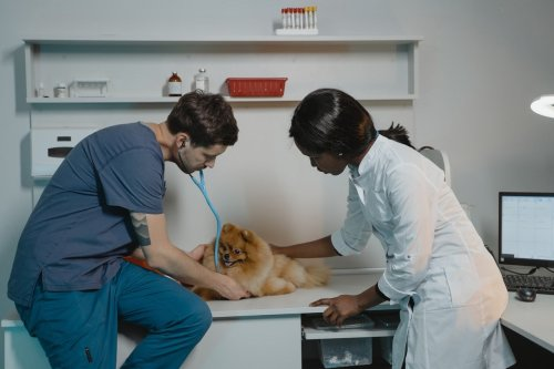 What you need to know about pet insurance for surgery | PawTracks