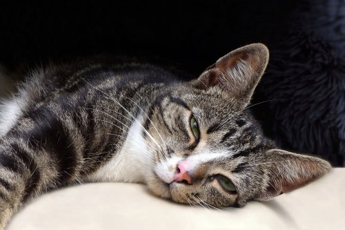 Understanding Why Cats Blink Slowly Can Help You Communicate | PawTracks