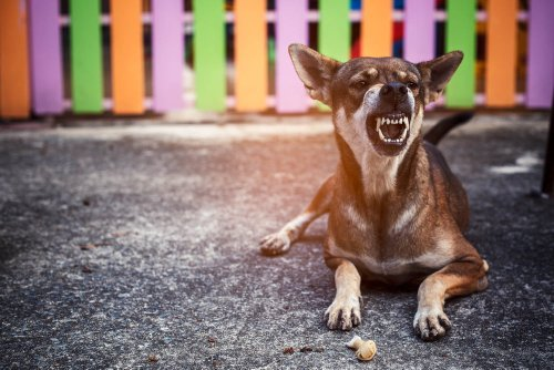 Why do dogs growl? This is what they're trying to tell you | PawTracks