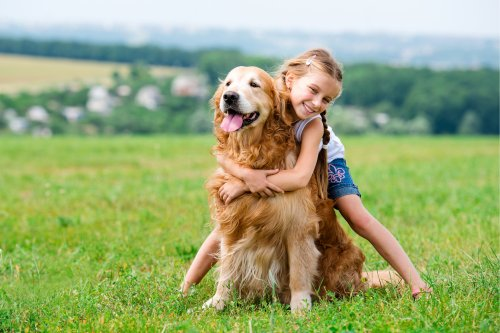 Learn to Understand a Dog's Body Language | PawTracks