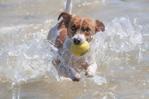 Why You Shouldn't Let Your Dog Play With Tennis Balls | PawTracks