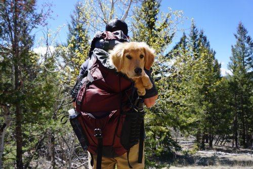 How To Use Your iPhone To Find Fun New Places To Explore With Your Dog | PawTracks