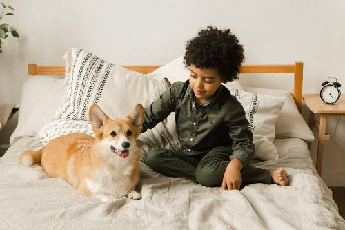 Help your newly adopted dog to feel at home with these 6 tips | PawTracks