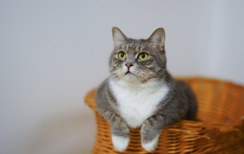 Now is the best time to adopt a cat — here's why | PawTracks