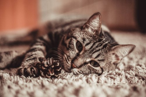 These Tips Can Help Your New Cat Feel Right at Home | PawTracks
