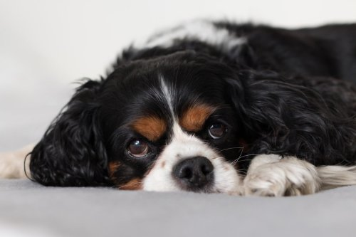 These Are The Best Breeds For First-Time Dog Owners | PawTracks
