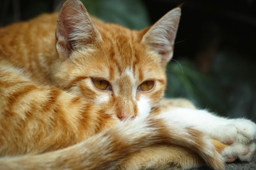 Your Cat Speaks With His Tail - Here's What He's Saying | PawTracks