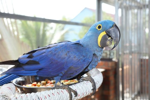 Here Are The 7 Smartest Birds You Can Have As A Pet   PawTracks