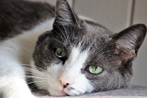 Be Sure to Watch for These Signs of Depression in Your Cat   PawTracks