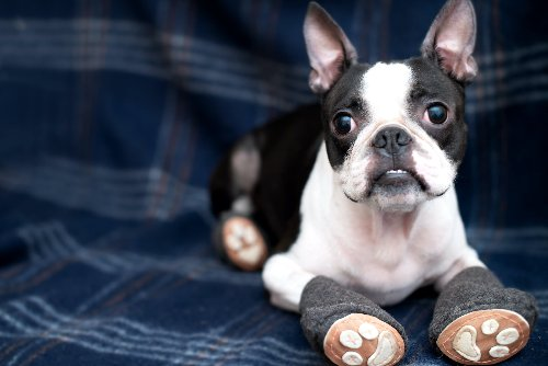 Concrete Gets Hot--Here's What You Need To Protect Your Dog's Paws | PawTracks
