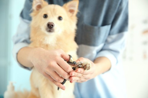 Cutting Your Dog's Nails Can Be Easy--Here's How   PawTracks