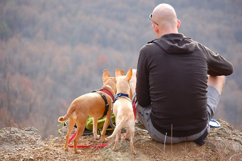 Bring These Items When You Hike With Your Small Dog | PawTracks