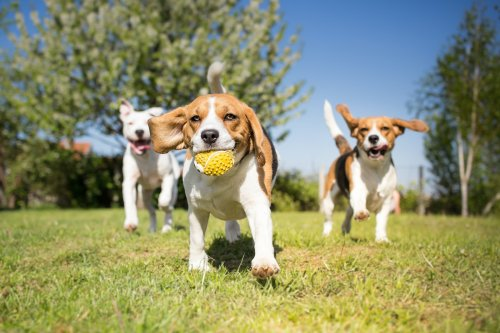 What You Should Know Before Taking Your Dog To The Dog Park | PawTracks