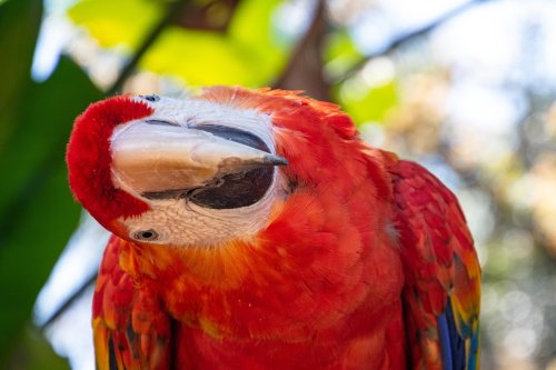 Here Are The 5 Reasons Parrots Bob Their Heads | PawTracks