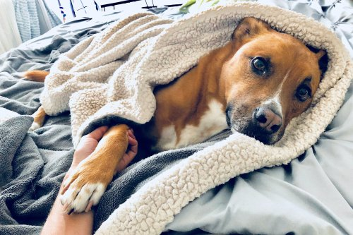6 Useful Tips To Reduce Your Dog's Thunderstorm Anxiety | PawTracks