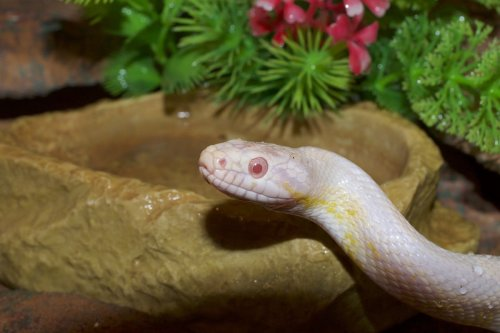 Here Are The 4 Steps You Need To Make Your Snake Habitat | PawTracks