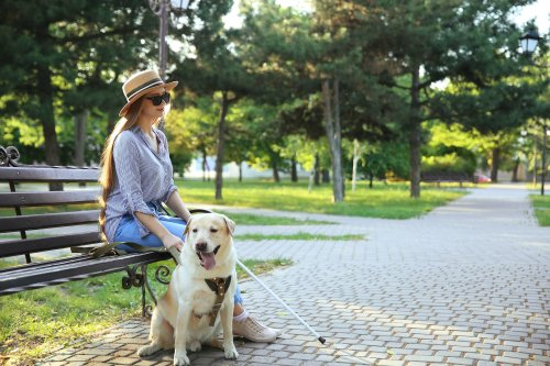 Everything You Need To Know About Assistance Dogs | PawTracks