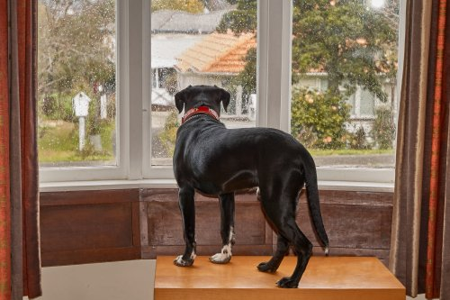 Help Your Dog Overcome Separation Anxiety   PawTracks