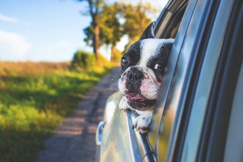 You Can Make Car Rides Bearable For Your Anxious Pup With These Tips | PawTracks