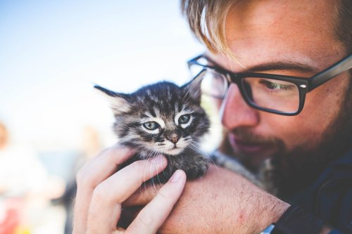 A Study Found That Cats Aren't as Loyal as You Think | PawTracks