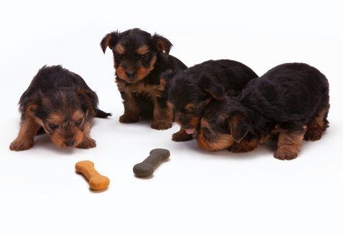 How to Find Healthy Pet Food Brands For Your Dog | PawTracks