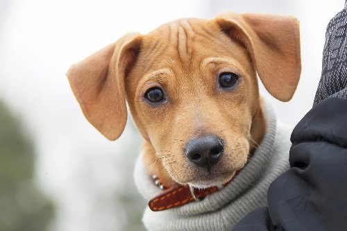 A 1-Year-Old Dog Is More Like 30 In Human Years, Not 7, Research Shows