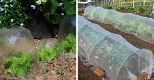 20 Garden Cloche Ideas to Protect Your Plants (Many Upcycled Ideas)