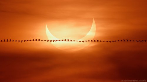 Photographer captures abstract bird flyby in front of the magnificent solar eclipse - DIY Photography